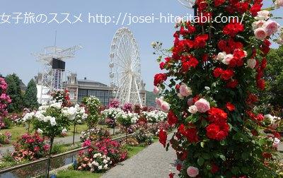 ハウステンボスのバラ祭